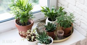 Houseplants and the Pandemic